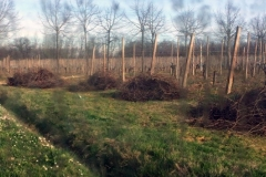 sarmenti-per-biomassa2
