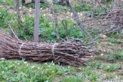 sarmenti-per-biomassa3